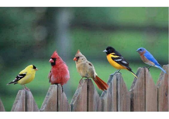 pájaros mirándose entre sí representando la ira