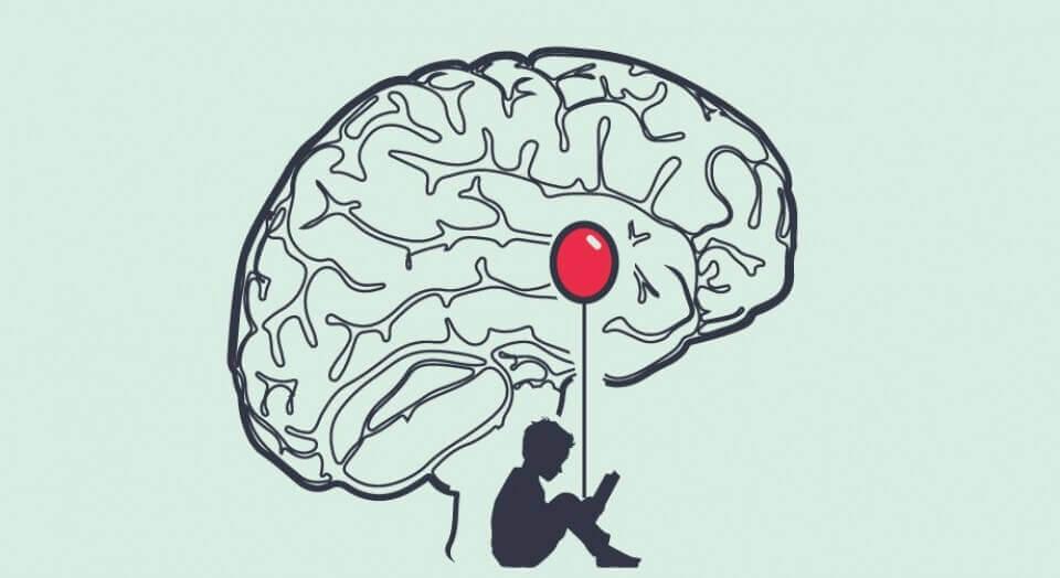 Amídala cerebral, parte esencial del cerebro de un mentiroso