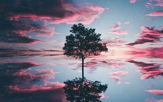 árbol representando el Nankurunasia