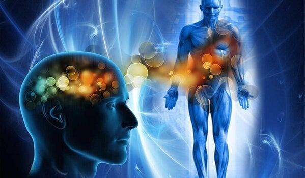 cuerpo humano para representar la terapia somática
