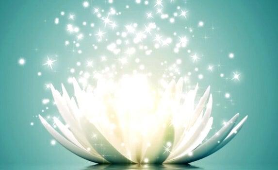 flor de loto representando las frases para recuperar la energía positiva