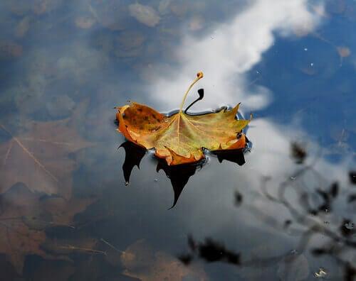 Hoja caída en otoño