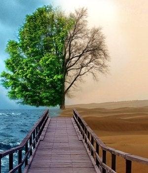 paisaje una mitad con mar y otra desértica representando el efecto de la depresión