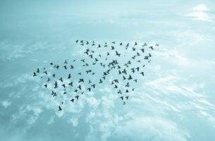 Pájaros formando una flecha