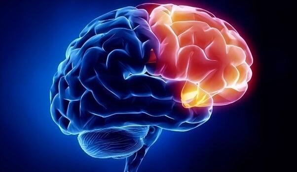 corteza orbitofrontal para representar la región cerebral de la culpabilidad