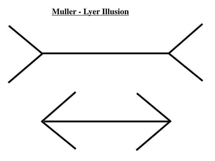 Ilusión de müller