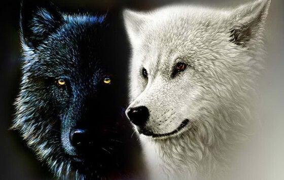 La leyenda cherokee de los dos lobos o nuestras fuerzas interiores