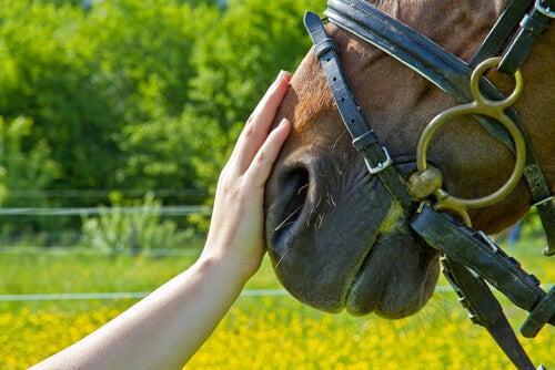 Mano con caballo