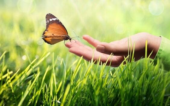 mano tocando mariposa representando la comunicación kinestésica