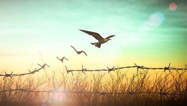 espino que se convierte en pájaros simbolizando la idea del buen vivir