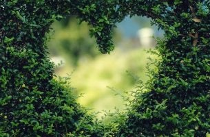 Seto en forma de corazón