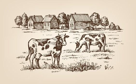 ilustración representando el el cuento de la vaquita