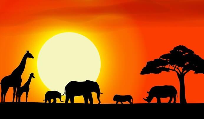 animales representando los proverbios africanos