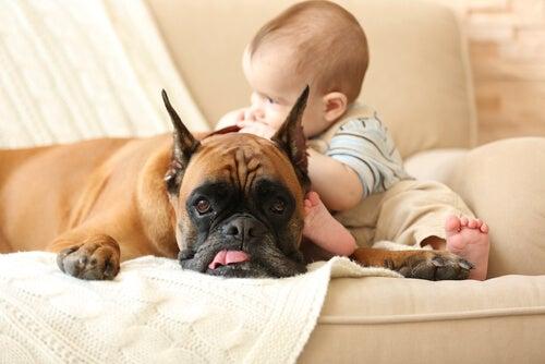 Bebé tocando un perro