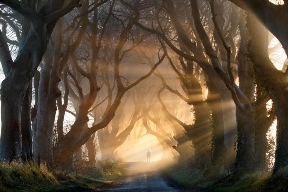 bosque representando las películas de miedo que creas en tu mente