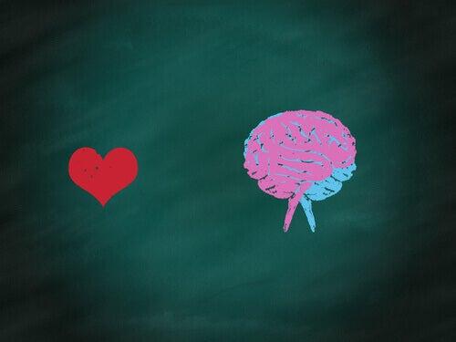 Corazón rojo y cerebro dibujados en una pizarra