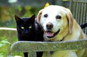 gato y perro en un banco representando el El duelo por nuestras mascotas