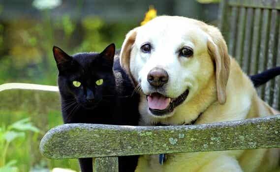 El duelo por nuestras mascotas: 4 claves que nos ayudarán