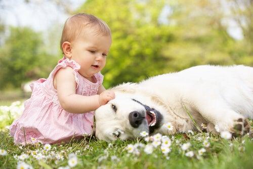 Niña con perro en el campo