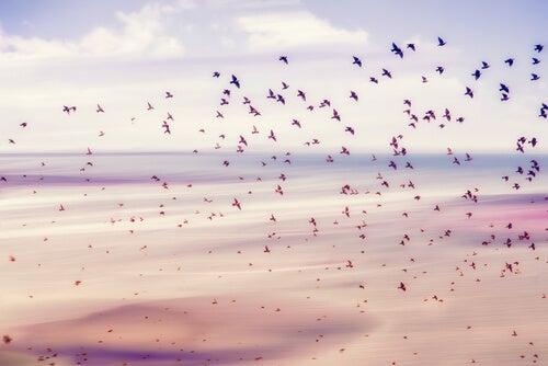 Pájaros para representar la libertad