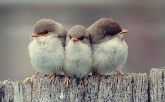 pájaros en una valla simbolizando los tres tipos de amistad