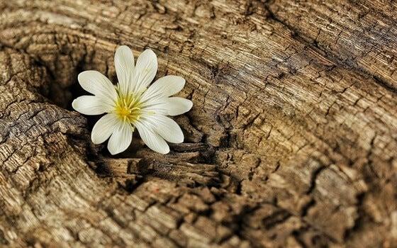 Flor que sale en árbol representando las lecciones de resiliencia en tiempos de coronavirus