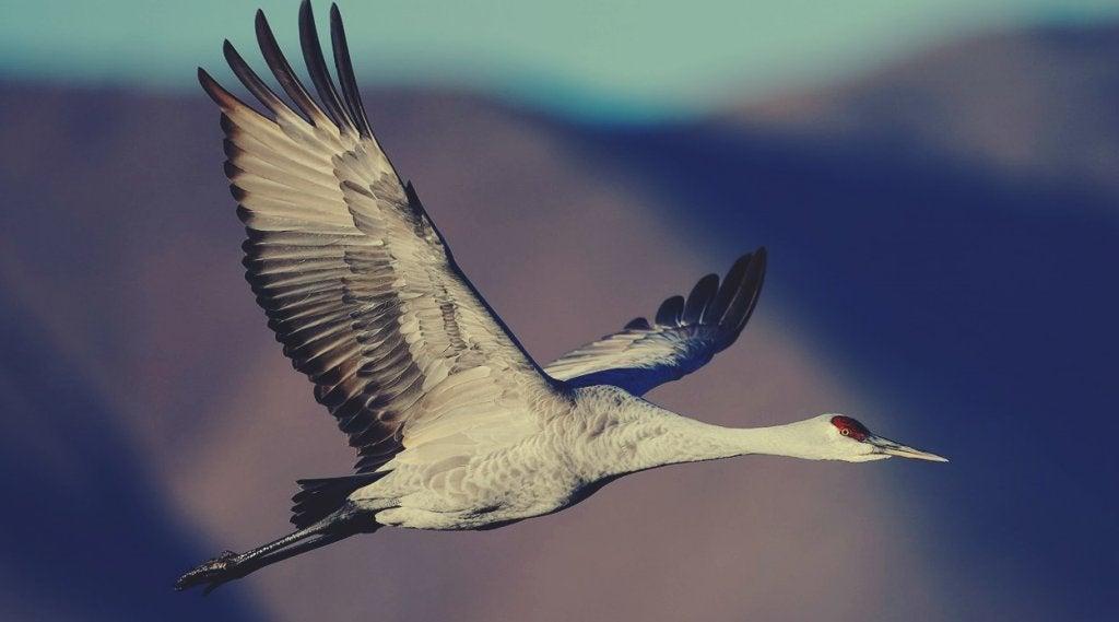 pájaro simbolizando el cuento del el anciano y la grulla