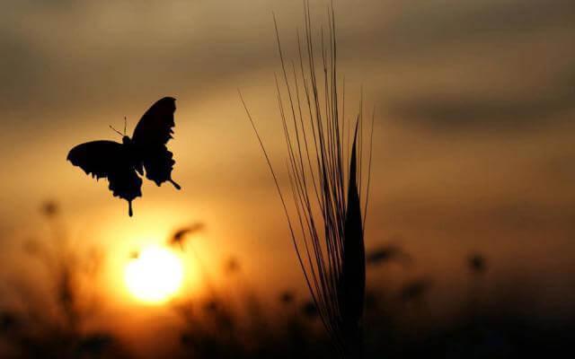 Mariposa al amanecer