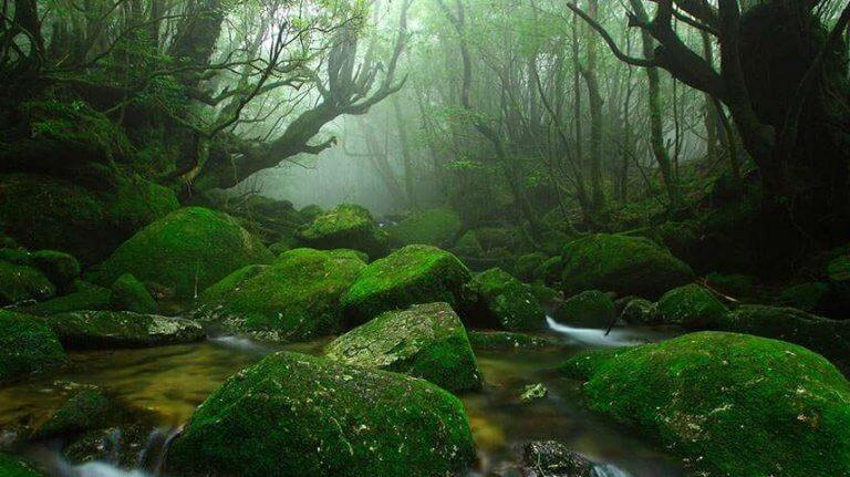 Paisaje de un bosque simbolizando la emodiversidad