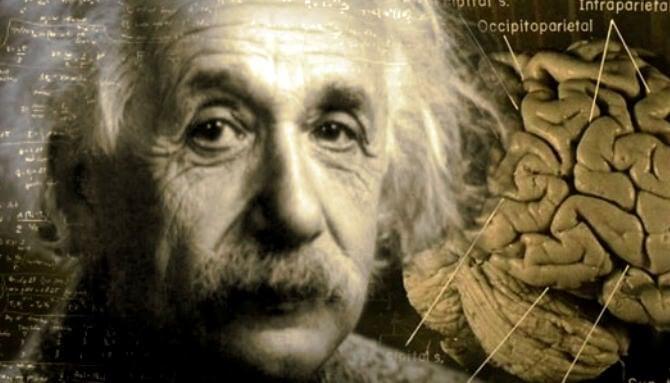 Imagen mostrando el cerebro de Albert Einstein representando si es posible mejorar nuestra inteligencia