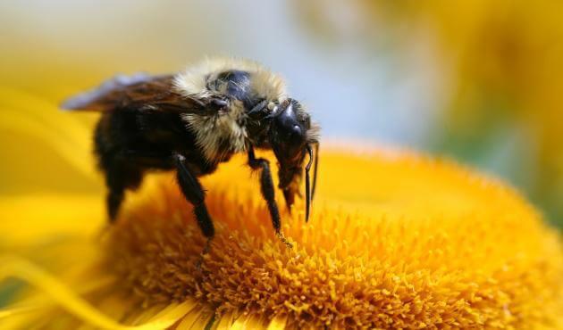 imagen representando lo que podemos aprender de las abejas