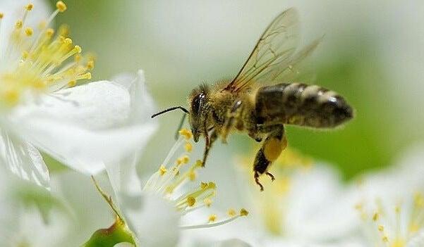 5 lecciones que podemos aprender de las abejas