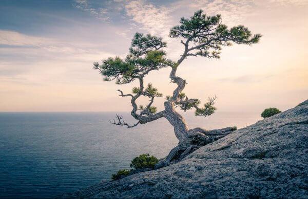 Árbol cerca del mar