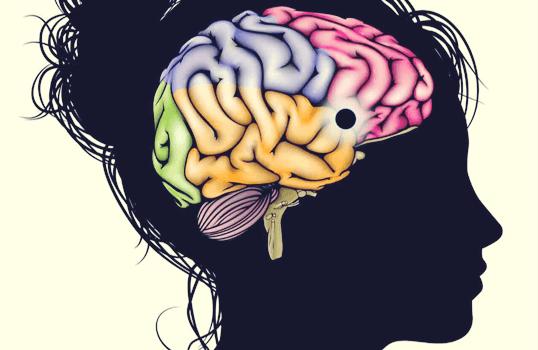 cabeza femenina con núcleo accumbens