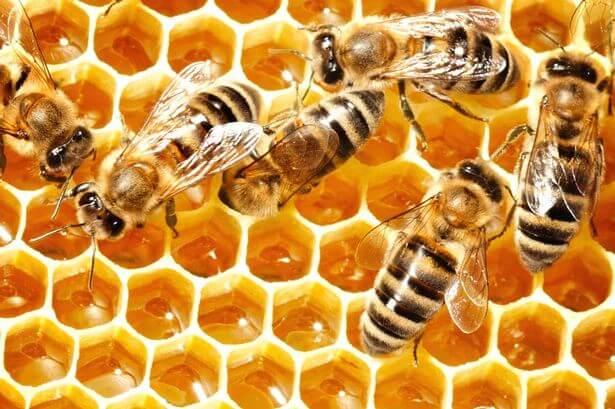 colmena representando lo que podemos aprender de las abejas