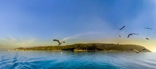 Gaviotas volando sobre una isla