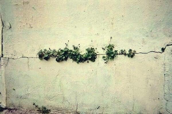 grita con plantas simbolizando que de todo se sale
