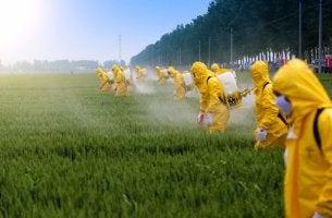 Grupo de hombres con pesticidas en el campo
