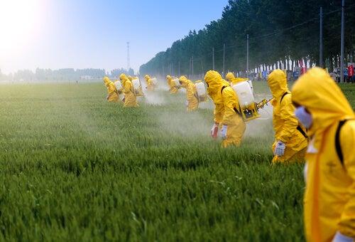 Efectos de los pesticidas en el cerebro