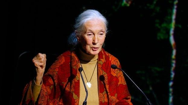 Imagen representando las frases de Jane Goodall