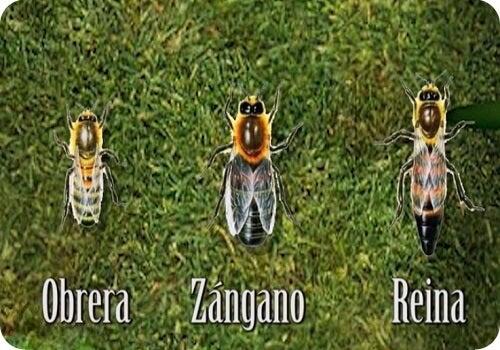 tipos de abeja representando lo que podemos aprender de las abejas