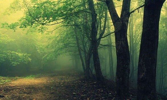 camino representando el test del bosque