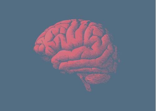 ¿Por qué el cerebro envejece? La respuesta está en los genes