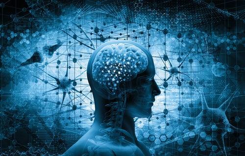 Cerebro de una persona para simbolizar el cerebro adicto