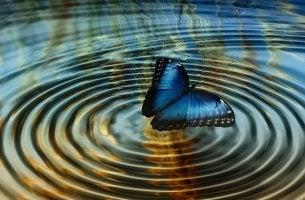 mariposa suspendida entre ondas simbolizando la la teoría del caos