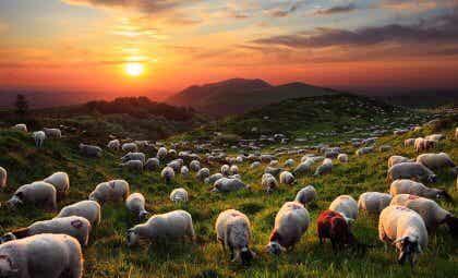 El mago y sus ovejas, un inspirador cuento oriental