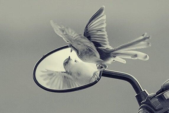 Las trampas del ego que vetan nuestra libertad y crecimiento personal