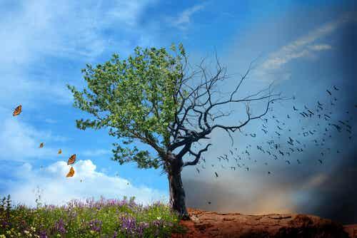 Salud ambiental, ¿por qué es importante?