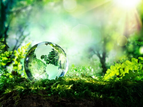 Bola del mundo transparente al aire libre