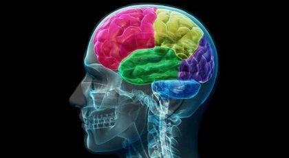 El cerebro adicto: anatomía de la compulsión y la necesidad